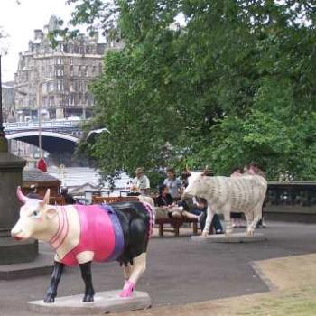 Edinburgh cow parade.
