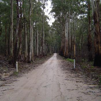 Stringybark Creek