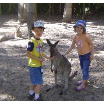 Kangaroos in Qld...