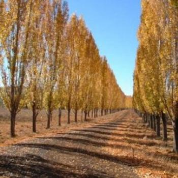 Autumn in Glen Innes