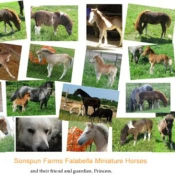 Falabella Miniature Horses and their Foals