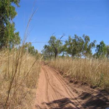 Bush track, Kimberleys, Wendy/Perth