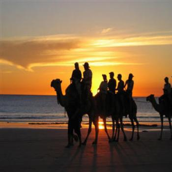 Camels at Cable Beach, Broome, Kimberleys, W.A. (Wendy/Perth)