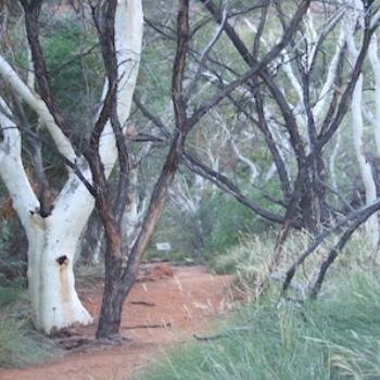King's Canyon walking track, Central Australia