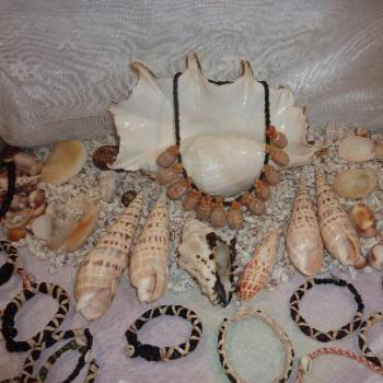 Display of shells (June)