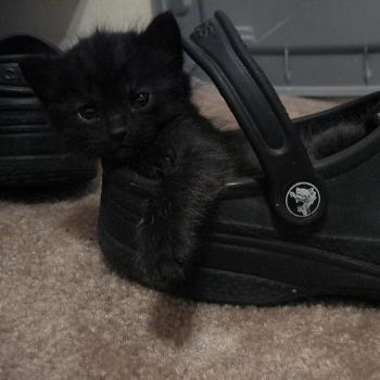 Kitten Ohm in Shoe