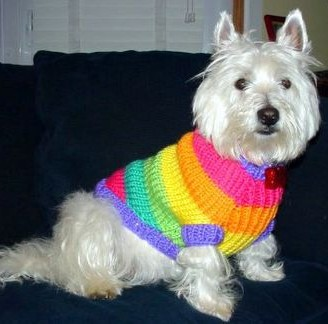 Maggie- Sweater Girl, Cute and Very Smart!