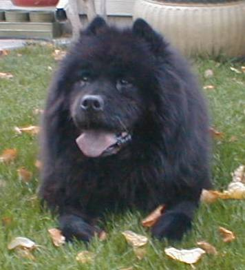 Seems folks prefer dog pics, so here's a happy Chow Chow to add to the scenery :)