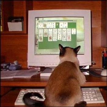 It's not just for you humans - us felines can play too...