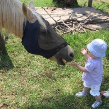 Laura feeding the horse called Boy